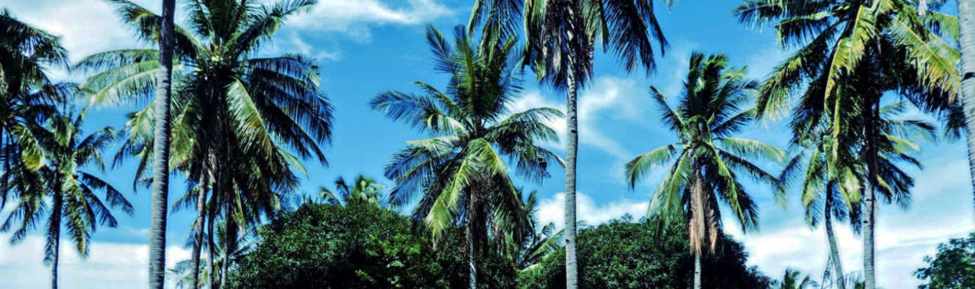 Mango Tree Ecohostel