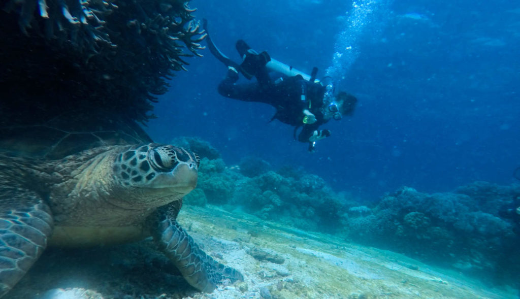 Diving with turtles in Apo Island